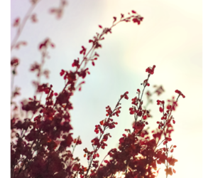 cloud, flowers, and nature image