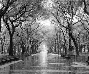 black and white, park, and rain image