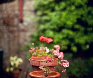 flower pot, flowers, and pot image