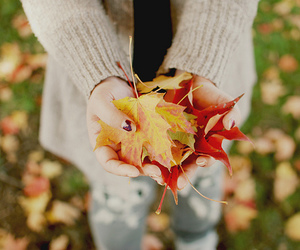 leaves and fall image