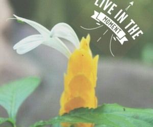 flower, yellow, and focus image