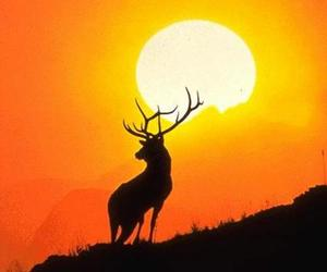 animals, deer, and mountains image