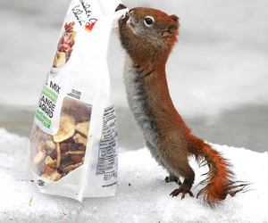 squirrel and animal image
