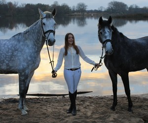 dressage, equestrian, and hermes image