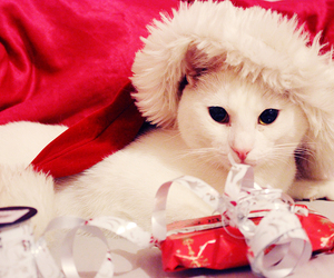cat, noel, and presents image