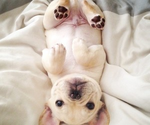 cute dog, pretty, and puppy image