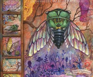 Cicada, mixed media, and Collage image
