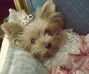 dog, cute, and princess image
