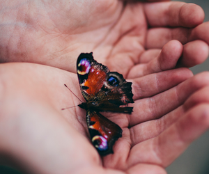butterfly, color, and hands image