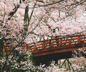 japan, bridge, and flowers image