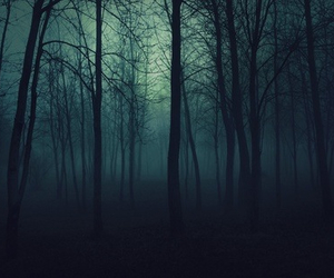 forest, dark, and tree image