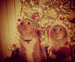 cat, merry christmas, and sweet image