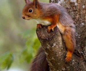 squirrel and cute image
