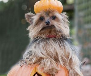 animals and Halloween image