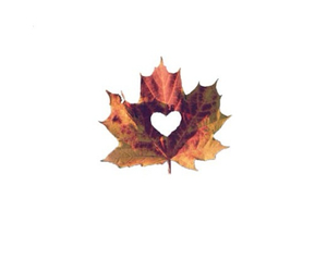autumn, heart, and leaf image