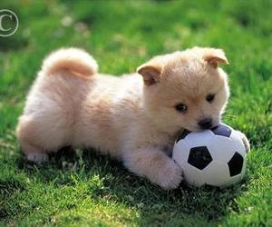 puppy, soccer, and cute image