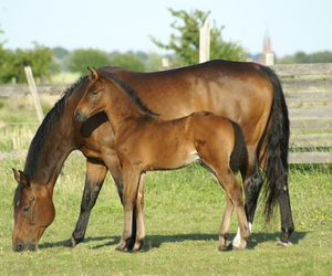 field, cute, and horse image