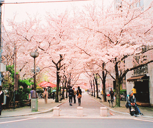 beautiful, japan, and sakura image