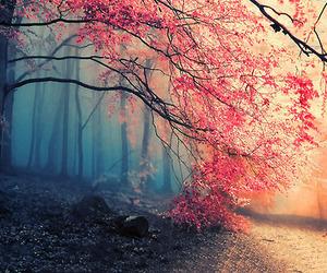 beautiful, cherry, and tree image
