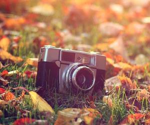 autumn, camera, and leaf image