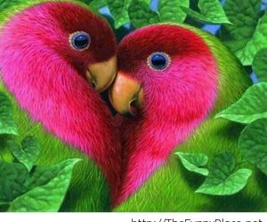 love, bird, and heart image