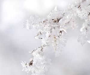 snow, christmas, and ice image
