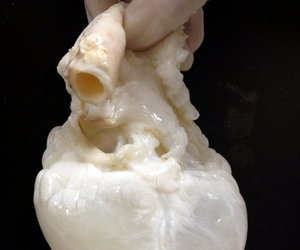 heart and gore image