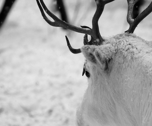 winter, reindeer, and snow image