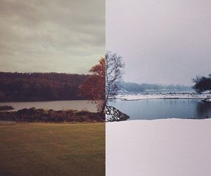 winter, autumn, and tree image