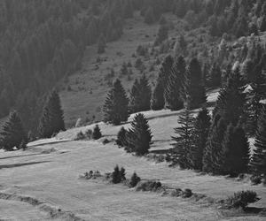 forest, transilvania, and nature image