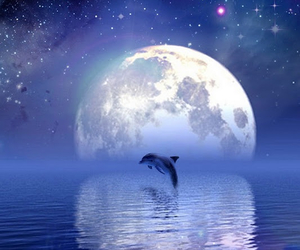 dolphin, moon, and water image