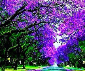 landscapes, purple, and trees image