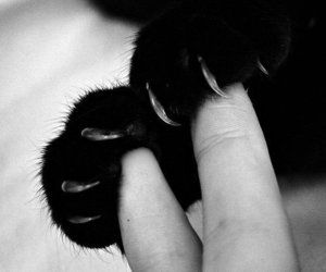 cat, black and white, and paws image