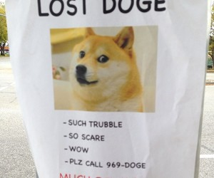 cool, doge, and funny image