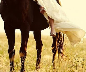 horse, photography, and dress image