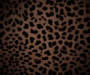 leopard and print image