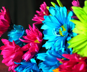 beautiful, color, and flowers image