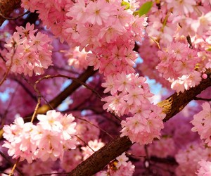 blossom, flowers, and nature image