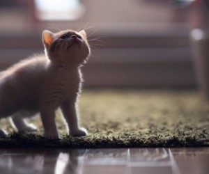 kitten and add more tags image
