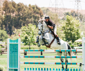 equestrian, horse, and show jumping image