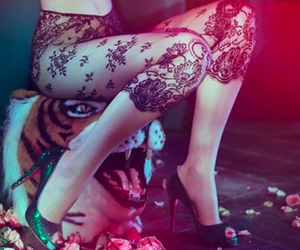 lace, tiger, and tights image