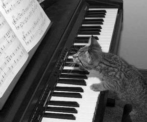 piano, black, and cat image