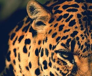 animal, leopard, and white image