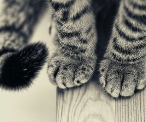 cat and paws image