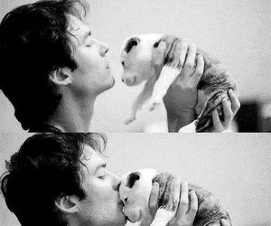 ian somerhalder, cute, and dog image