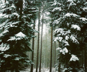 snow, forest, and tree image