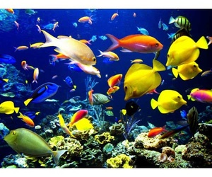 aquarium and fish image