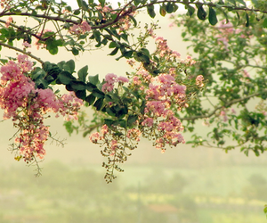 landscape, trees, and flowers image