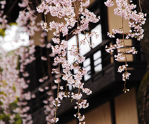 flowers, japan, and black and white image