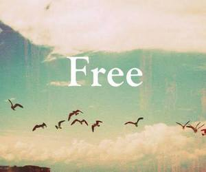 free, birds, and freedom image